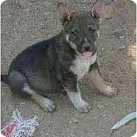 Adopt A Pet :: Jem - Phoenix, AZ