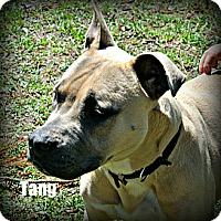 Adopt A Pet :: Tang - Vancleave, MS