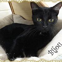 Adopt A Pet :: Bijou - Ozark, AL