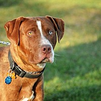Adopt A Pet :: Rufus - Denver, CO