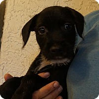 Adopt A Pet :: Cantaloupe - Oviedo, FL