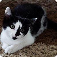 Adopt A Pet :: Lisa - Baltimore, MD
