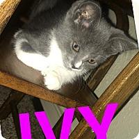 Adopt A Pet :: Ivy - Taylor, MI