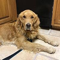 Adopt A Pet :: Henry - Washington, DC