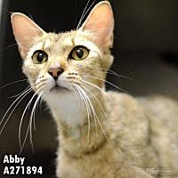 Adopt A Pet :: ABBY - Conroe, TX