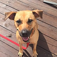 Adopt A Pet :: Lucy Renee - Homer, NY