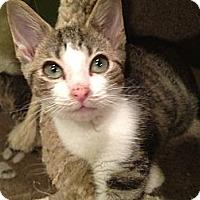 Adopt A Pet :: James - East Hanover, NJ