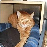 Adopt A Pet :: Spickett - Fort Lauderdale, FL