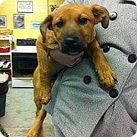 Adopt A Pet :: Tucker - Peru, IN