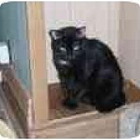 Adopt A Pet :: Cher - North Boston, NY