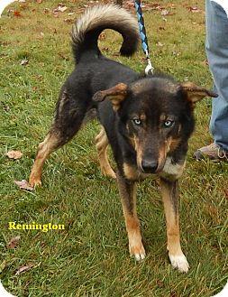Shepherd (Unknown Type) Mix Dog for adoption in Somerset, Pennsylvania - Remington