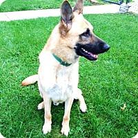 Adopt A Pet :: Tanner - Evergreen Park, IL