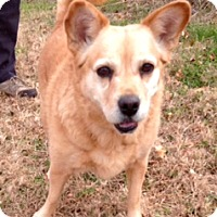 Adopt A Pet :: LEXIE - Leland, MS