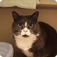 Adopt A Pet :: Dolly - New York, NY