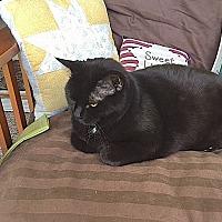 Adopt A Pet :: Diamond - Fowlerville, MI
