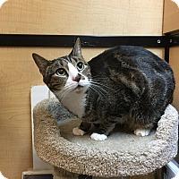 Adopt A Pet :: Lucky - Riverside, CA
