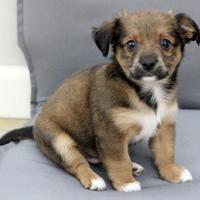 Adopt A Pet :: Rolly - Dalton, GA