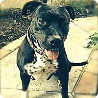 Adopt A Pet :: Courtesy Listing: Freeway - San Diego, CA