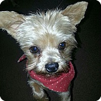 Adopt A Pet :: Pooka - Wichita, KS