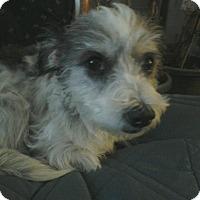 Adopt A Pet :: Diamond - Carey, OH