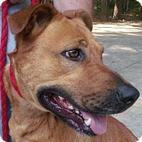 Adopt A Pet :: Mia - Muskegon, MI