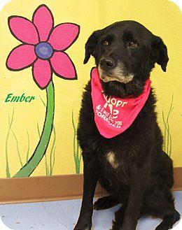 Border Collie Mix Dog for adoption in Hillsboro, Texas - Ember