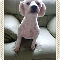 Adopt A Pet :: Quinn - Tumwater, WA