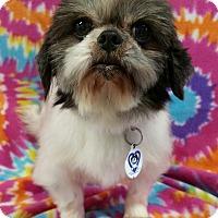 Adopt A Pet :: Delta Miller - Urbana, OH