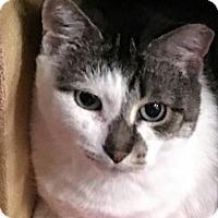 Adopt A Pet :: Sally - Acme, MI