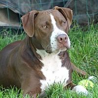 Adopt A Pet :: Snoog Dogg - Dayton, OH