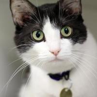 Adopt A Pet :: Francis - Columbus, OH