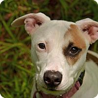 Adopt A Pet :: 10311476 LUCY - Brooksville, FL