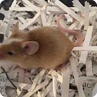 Adopt A Pet :: CUPID - Urbana, IL