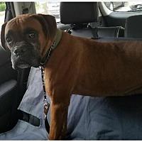 Adopt A Pet :: Rex - Brentwood, TN