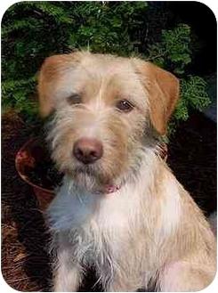 Terrier (Unknown Type, Medium) Mix Dog for adoption in Cairo, Georgia - Lena