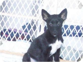 Husky Mix Dog for adoption in Wasilla, Alaska - Belle