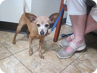 Chihuahua Mix Dog for adoption in Oak Ridge, New Jersey - Camile