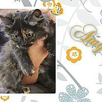 Adopt A Pet :: Amy - Washington, DC