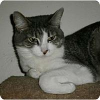 Adopt A Pet :: Cora - lake elsinore, CA