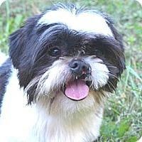 Adopt A Pet :: Mookie - Mocksville, NC