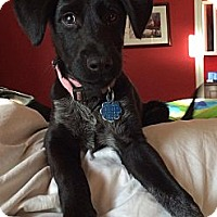 Adopt A Pet :: DIXON - Loxahatchee, FL