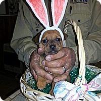 Adopt A Pet :: Milky Way - Ranger, TX