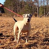 Adopt A Pet :: Petey - Staunton, VA