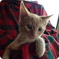 Adopt A Pet :: Sheldon - St. Louis, MO