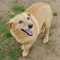 Adopt A Pet :: Shorty - Iola, TX