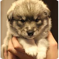 Adopt A Pet :: Hamitch - Fredericksburg, VA