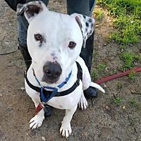 Adopt A Pet :: Toby - Marina Del Ray, CA