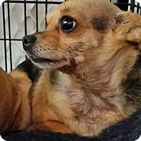 Adopt A Pet :: Rosie - Jackson, MO