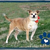 Adopt A Pet :: Freddie (AKA Freddie Bear) - Marion, KY