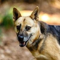 Adopt A Pet :: Pumpkin - Decatur, GA
